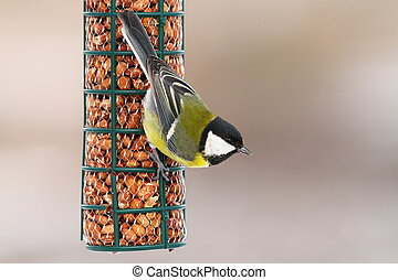 great tit hanging on peanut feeder over out of focus...