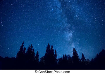 Forest at night with pine trees under dark blue sky with...