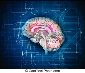 Human Brain research abstract scientific background with DNA...