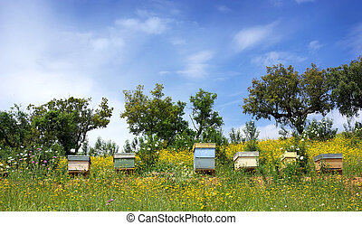 Bee houses - Bee houses at Portugal