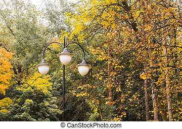 colorful trees in autumn and some street lamps - colorful...