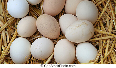 many fresh eggs in the basket of the farm - many fresh eggs...