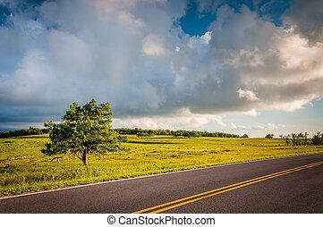 Tree along Skyline Drive at Big Meadows, in Shenandoah National Park, Virginia.