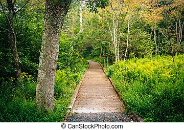 Tree and boardwalk path on the Limberlost Trail in Shenandoah National Park, Virginia.