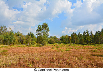 Peat bog in polish mountains - Peat bog in polish National...