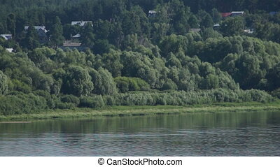 summer forest at riverside of river in Russia