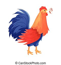 Full body of colorful rooster singing on white background -...