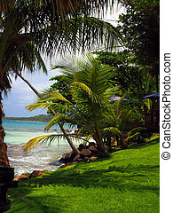 tropics scene of Long Bay harbor beach tropical trees Big...