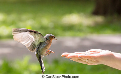 finch flew to the hand - The photograph depicts finch flew...