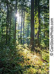 küstenwald - heiligendamm