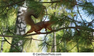 squirrel jumping from branch in the Park