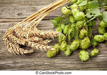 Malt and hops - beer brewing ingredients