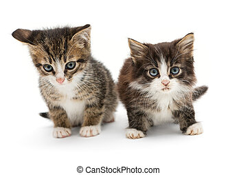 Two little fluffy kitten with big blue eyes, isolated on...