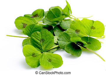 green leaves - Three leaf clover on a white background