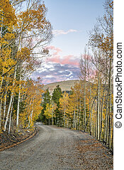 back country road in Colorado with aspen trees in fall...