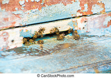 The bees and the queen bee on the comb