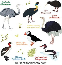 set of different birds, cassowary southern, ostrich,...