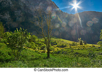 Backlit Scene with Sun Flares near Konigsee of Germany -...