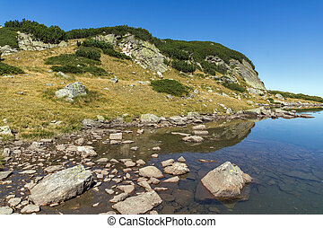 small Lake, Rila Mountain - Green grass and reflection in...