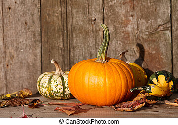 Autumn pumpkins still life - Autumn pumpkins on old barn...