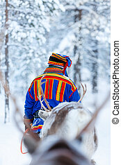 Reindeer safari - Reindeer in a winter forest in Finnish...