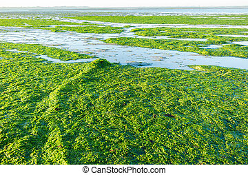 Anchoring in seaweed field, Waddensea, Netherlands - Anchor...