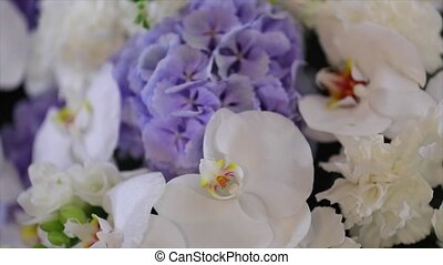 Close-up of white orchids on light background. - Close-up of...