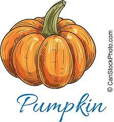 Orange autumn pumpkin vegetable sketch