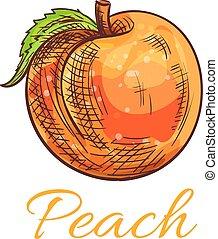 Fresh orange peach fruit sketch for food design - Fresh...