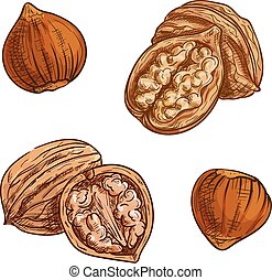 Hazelnut and walnut sketch for healthy food design -...