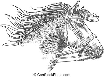 Sketch of horse head in a bridle - Horse head in a bridle...