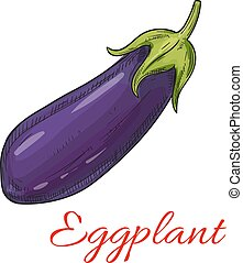 Sketched eggplant or aubergine vegetable - Sketched eggplant...