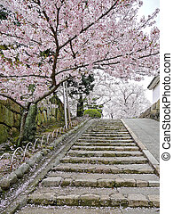 Cherry blossoms on stairs - In Japan, Sakura cherry...