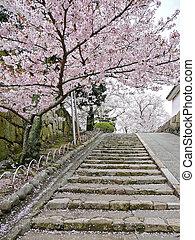 Cherry blossoms on stairs - In Japan, Sakura (cherry...