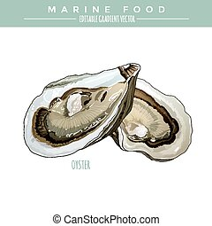 Oyster. Marine Food - Oyster illustration. Marine food,...