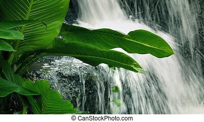 Large Plant By Jungle Waterfall - Tropical plant with big...