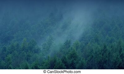 Mist Rolling Over Forest In Evening - Vast forest in the...