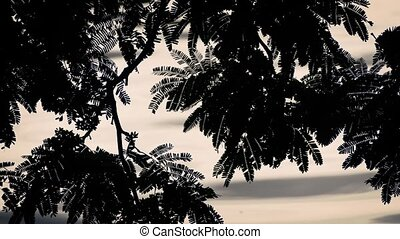Plants By Rippling Water Silhouette - Closeup of plants near...