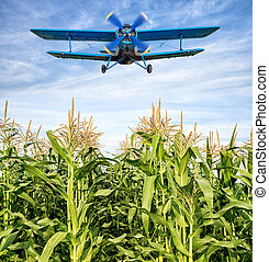 biplane - airplane over a maize field