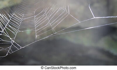 The spider web, morning in the forest
