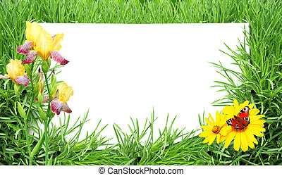 蝴蝶, 花, 草, 紙, 綠色, 表, 白色