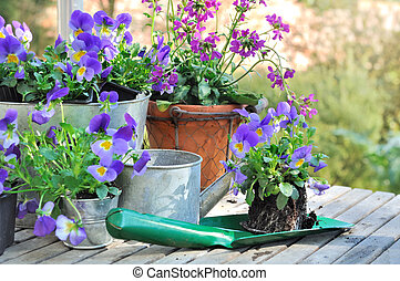 flowers to plant in garden