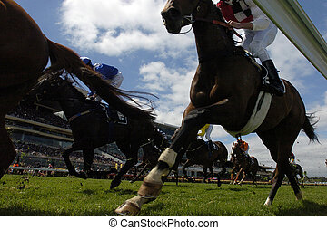 A pack of race horses in action from under the rails