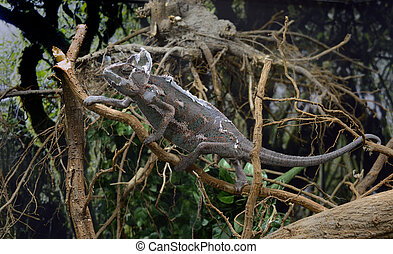 colorfull lizard - Beautifull colorfull lizard climb the...