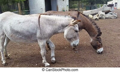 Two Donkeys - Two Beautiful Donkeys at the Farm