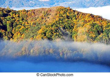 Foggy autumn landscape