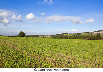 young crops in the yorkshire wolds - young arable crops with...