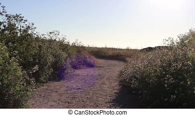 Nature path and wild flowers - California Nature path and...