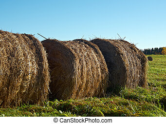pyramid of hay .Autumn rural landscape Arkhangelsk region,...