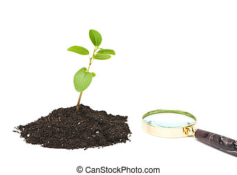 Fresh sprout and magnifying glass isolated on white...